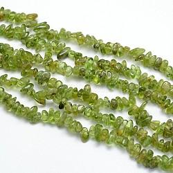 copeaux de péridot naturelles brins de perles, 6~9x6~9 mm, trou: 1 mm; sur 31.5(G-O049-C-07)