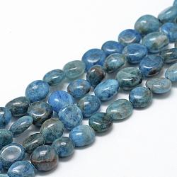 Chapelets de perles en apatite naturelle, ovale, 8~15x7~12x4~12mm, trou: 1mm; environ 30~45 pcs/chapelet, 15.7(X-G-R445-8x10-24)