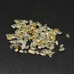 Естественно цитрин чипов бисера, нет отверстий / незавершенного, 2~8x2~4 мм; около 8500 шт / 500 г(G-O103-09)
