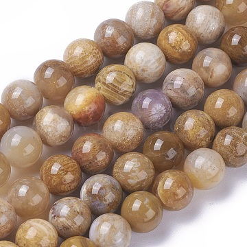 Natural Fossil Coral Beads Strands, Round, 8mm, Hole: 0.8mm, about 47pcs/strand, 15.1~15.5 inches(38.5~39.4cm)(X-G-F648-01-C)