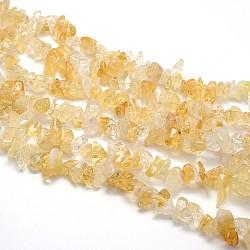 Природный цитрин бисер нитей, чипсы, 8~12x8~12 mm, отверстия: 1 mm; о 31.5(G-O049-C-42)