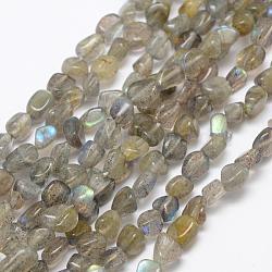 """Chapelets de perles en labradorite naturelle , nuggets, 6~8x4~6mm, trou: 1mm; 15.3"""" (39cm)(G-F521-42)"""